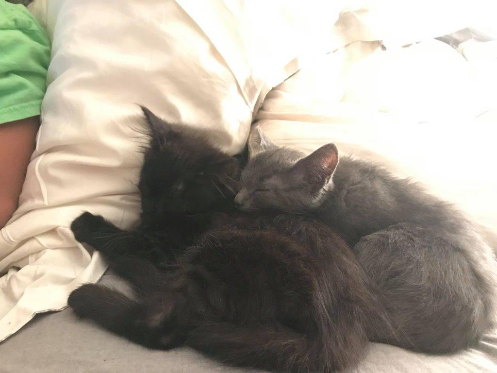 Kitties Sleeping