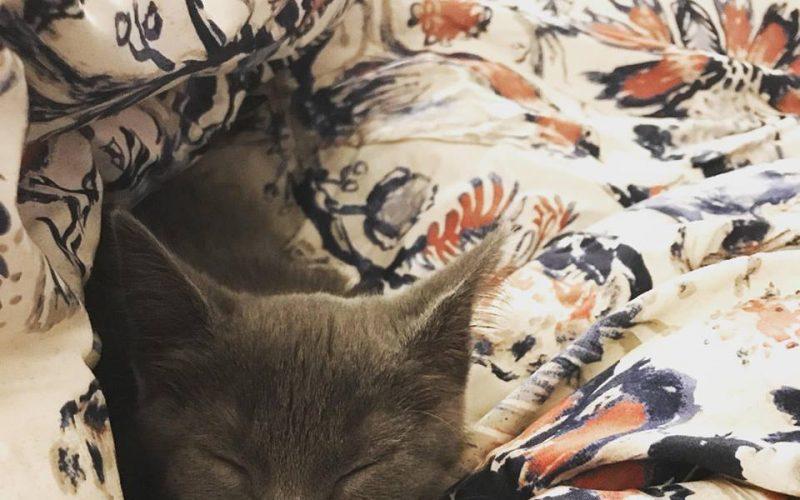 George & Gracie: Our Rocky Mountain Feline Rescue Adoption Story!