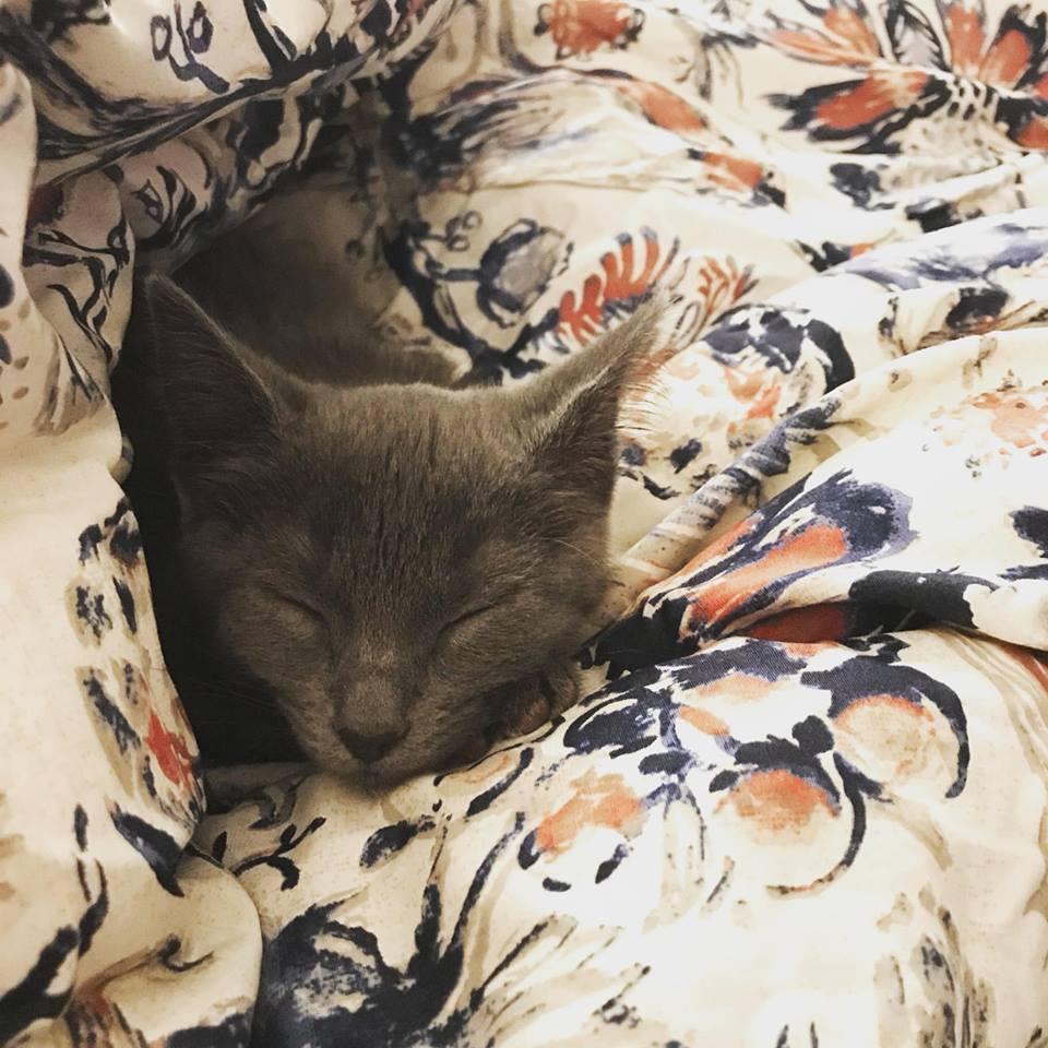 Rocky Mountain Feline Rescue Kittens