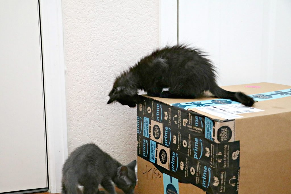 Cats with Amazon Box
