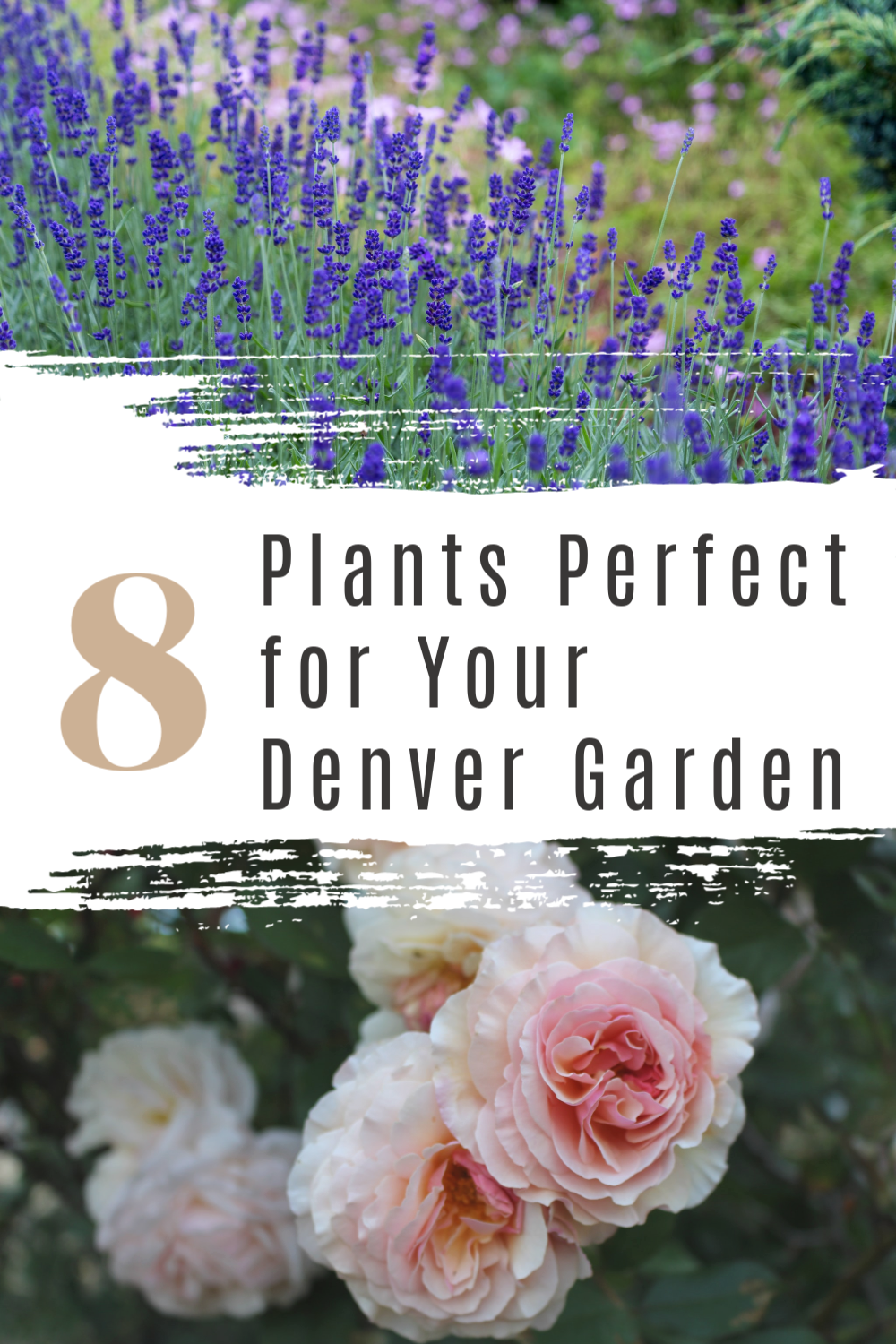 8 Plants Perfect for Your Denver, CO Garden