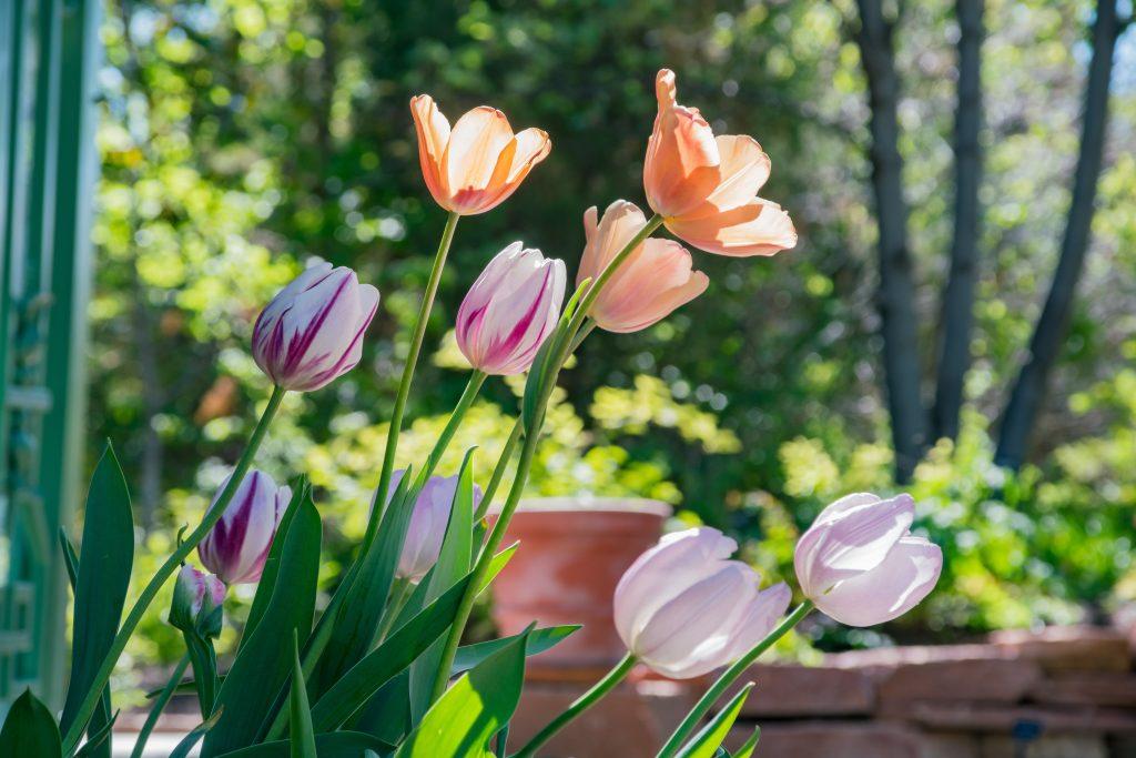 Flowers at the Denver Botanic Gardens