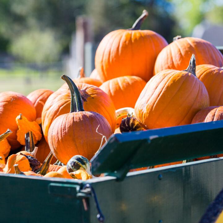 best denver pumpkin patch